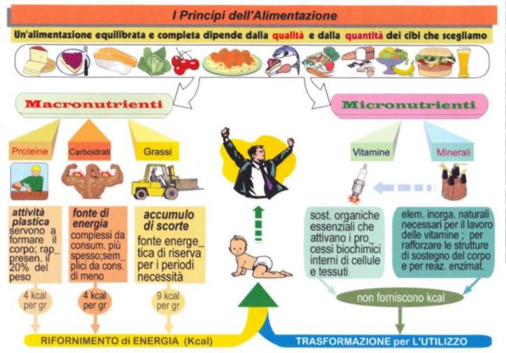 Phyto Fitness Salute E Benessere